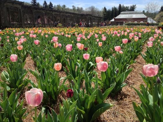 Biltmore flowers 3
