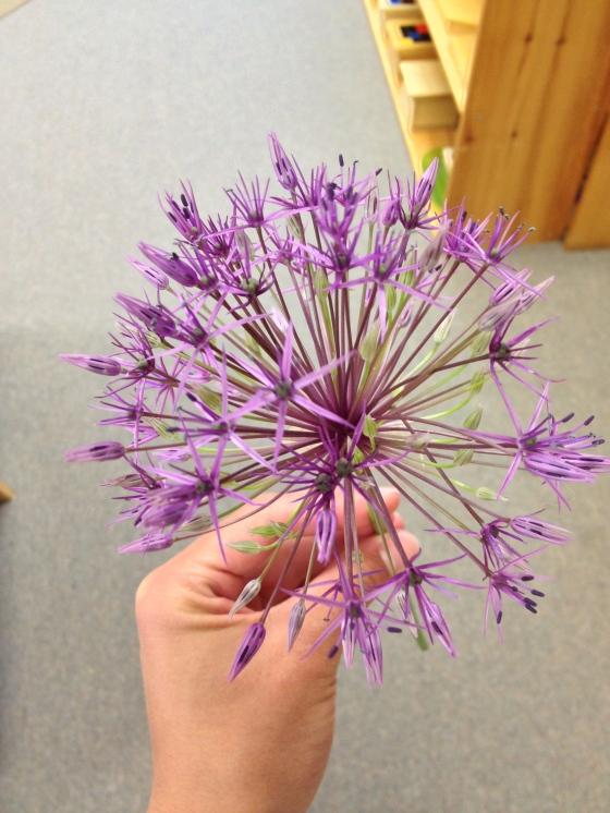 Firework flower
