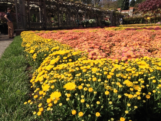Fall flowers in the Walled Garden at the Biltmore